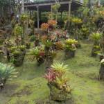 01_Jardin de Balata