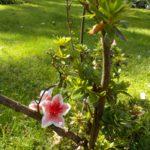 14_Zarte Blume