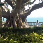 09_Park mit eindrucksvollen Gummibäumen